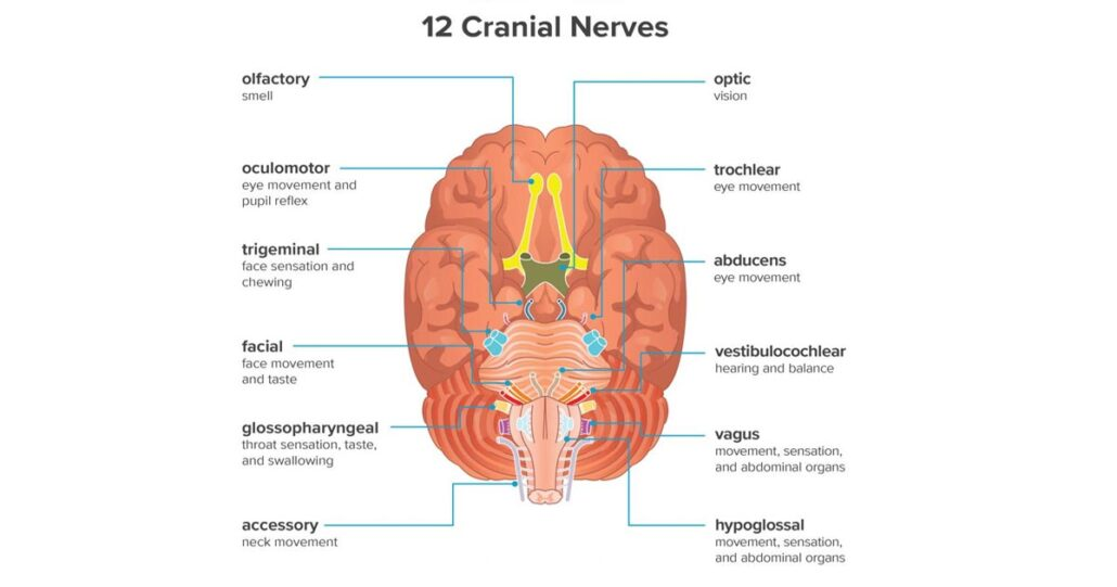 Cranial Nerve Injuries